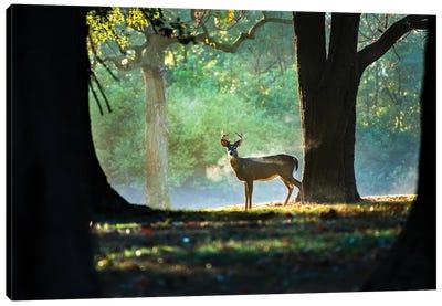 Buck Breath On A Majestic Morning Canvas Art Print