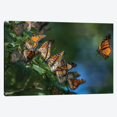 3000 Mile Migration Canvas Print #SDR54} by Sandra Rust Canvas Artwork