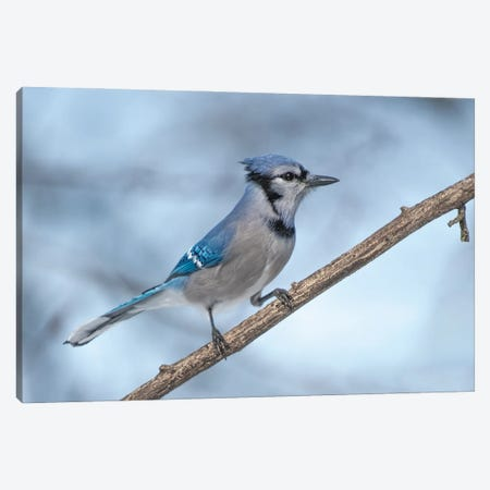 Out On a Limb Canvas Print #SDR55} by Sandra Rust Canvas Art