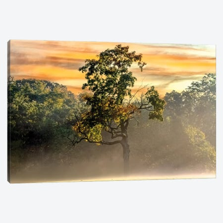 Foggy Fall Morning Canvas Print #SDR5} by Sandra Rust Canvas Artwork
