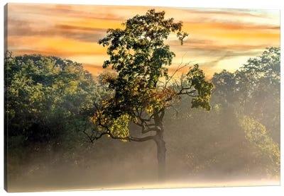 Foggy Fall Morning Canvas Art Print