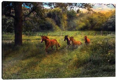 4 Horses Canvas Art Print