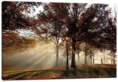 Sun Rays Through The Forest II Canvas Art Print