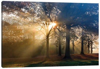 Sun Rays Through The Forest III Canvas Art Print