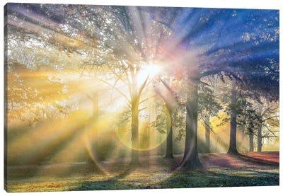 Sun Rays Through The Forest IV Canvas Art Print