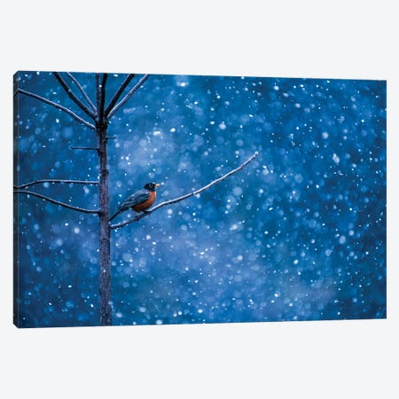 American Robin Waiting Out The Winter Storm Canvas Print #SDR6} by Sandra Rust Canvas Wall Art