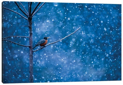 American Robin Waiting Out The Winter Storm Canvas Art Print