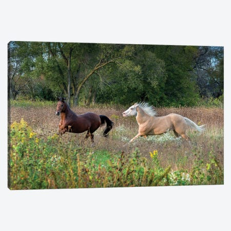 Wild And Free I Canvas Print #SDR73} by Sandra Rust Art Print