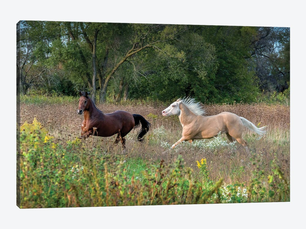 Wild And Free I by Sandra Rust 1-piece Canvas Art