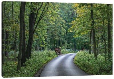A Summer Forest Drive Canvas Art Print
