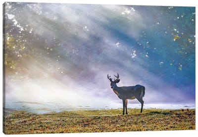 Deer In The Forest Sun Rays. Canvas Art Print