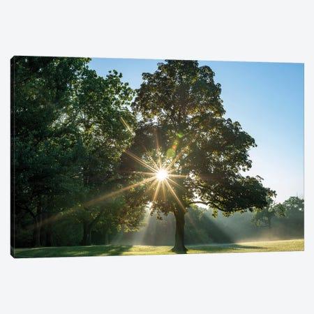 Sunrays On A Foggy Fall Morning Canvas Print #SDR8} by Sandra Rust Art Print