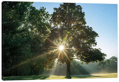 Sunrays On A Foggy Fall Morning Canvas Art Print