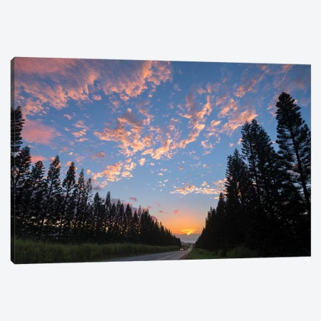 Haleiwa Pines Canvas Print #SDV114} by Sean Davey Canvas Art