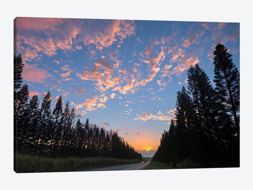Haleiwa Pines by Sean Davey 1-piece Canvas Wall Art