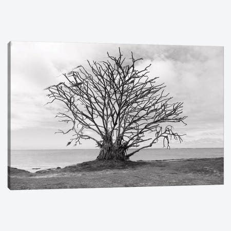 Barron Tree Canvas Print #SDV11} by Sean Davey Art Print