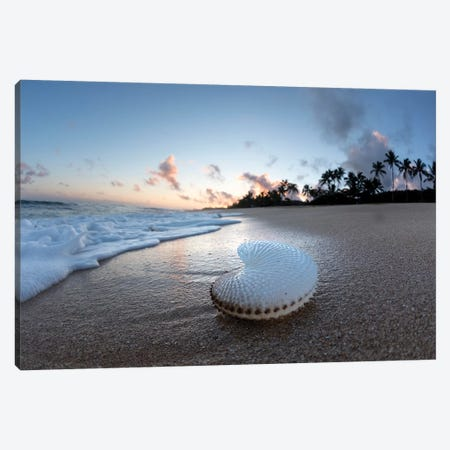 Paper Nautilus Palms Canvas Print #SDV157} by Sean Davey Canvas Art
