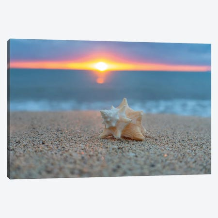 Pastel Shell Dawn Canvas Print #SDV164} by Sean Davey Canvas Print