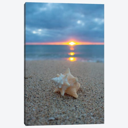 Pastel Shell Dawn Vert Canvas Print #SDV165} by Sean Davey Art Print