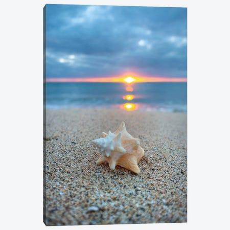 Pastel Shell Dawn Vert Canvas Print #SDV165} by Sean Davey Art Print
