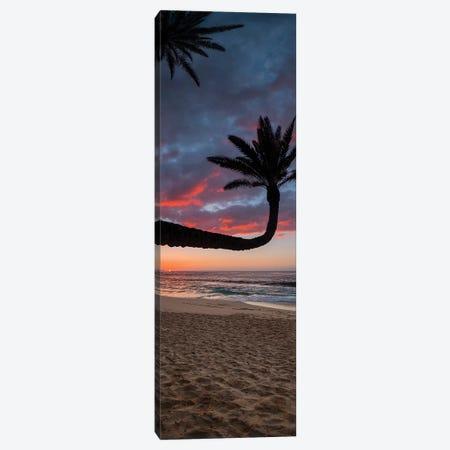 Paumalu Palm I Canvas Print #SDV166} by Sean Davey Canvas Art Print