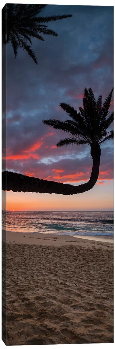 Paumalu Palm I Canvas Art Print