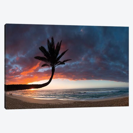 Paumalu Palm II Canvas Print #SDV167} by Sean Davey Canvas Art Print