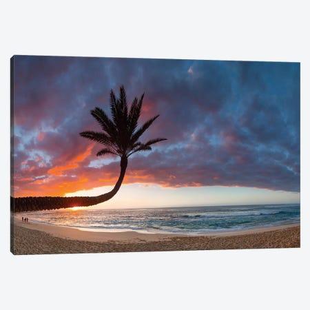 Paumalu Palm II Canvas Print #SDV167} by Sean Davey Canvas Art Print