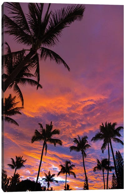Pink Cloud Sunrise Vert Canvas Art Print