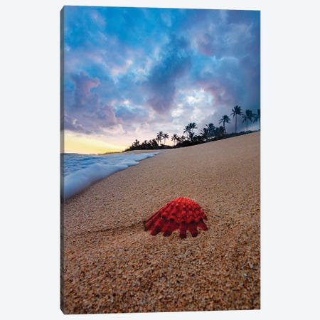 Red Dawn Canvas Print #SDV182} by Sean Davey Canvas Artwork