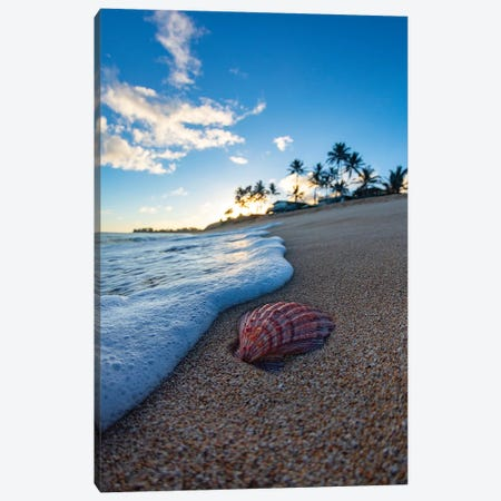 Red Shell Foam Canvas Print #SDV183} by Sean Davey Canvas Art