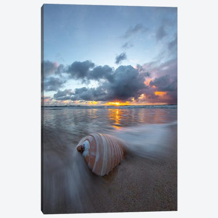 Ribbed Shell Pastels 3-Piece Canvas #SDV186} by Sean Davey Canvas Print