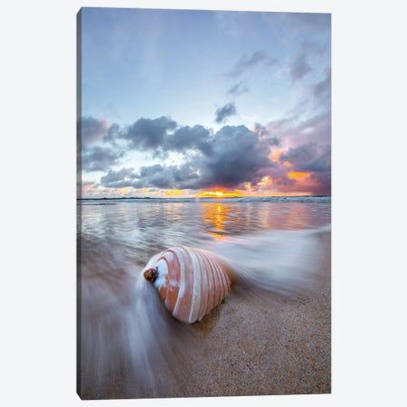 Ribbed Shell Pastels Canvas Print #SDV186} by Sean Davey Canvas Print