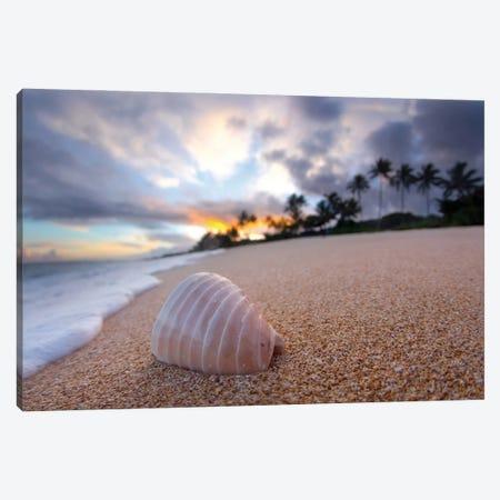 Ribbed Shell Sunrise 3-Piece Canvas #SDV187} by Sean Davey Canvas Print