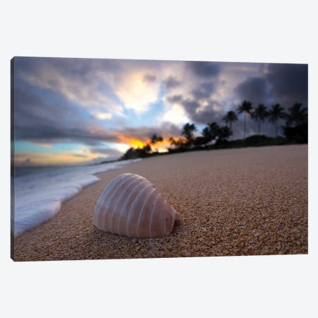 Ribbed Shell Sunrise Canvas Print #SDV187} by Sean Davey Canvas Print