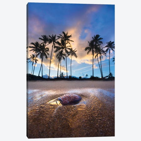 Shell Palms Canvas Print #SDV202} by Sean Davey Canvas Print