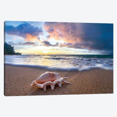 Shell Sea Drops Canvas Print #SDV203} by Sean Davey Canvas Art Print