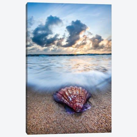 Shell Sunrise Canvas Print #SDV204} by Sean Davey Canvas Wall Art