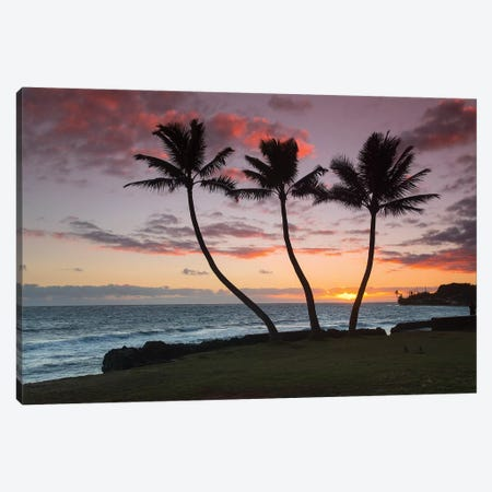 Thrre Palm Sunrise Canvas Print #SDV235} by Sean Davey Canvas Art Print