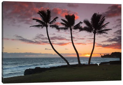 Thrre Palm Sunrise Canvas Art Print