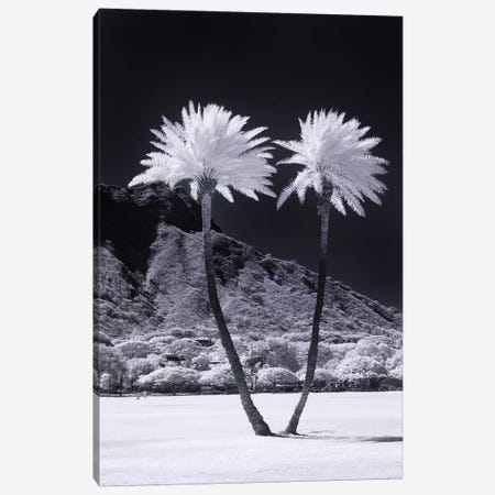 Twin Palms Canvas Print #SDV246} by Sean Davey Canvas Artwork