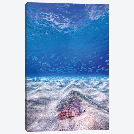 Waimea Shell Canvas Print #SDV254} by Sean Davey Canvas Print