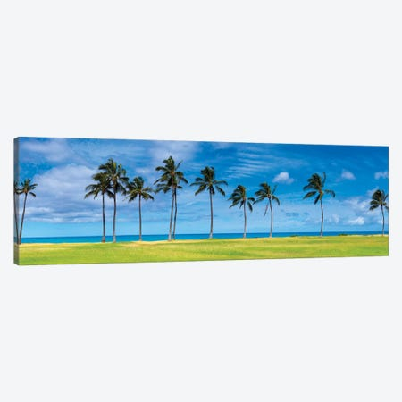 West Palms Canvas Print #SDV261} by Sean Davey Art Print