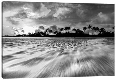 Coconut Rush In Black And White Canvas Art Print