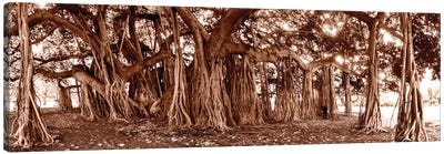 Coppertone Banyon Tree Canvas Art Print
