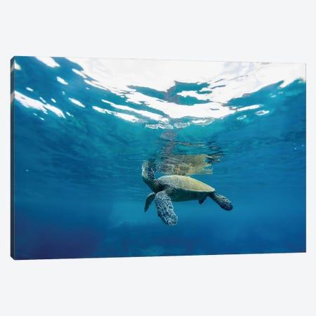 Breathing Turtle Canvas Print #SDV32} by Sean Davey Canvas Art Print