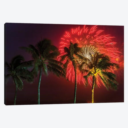 Firework Palms Canvas Print #SDV64} by Sean Davey Art Print