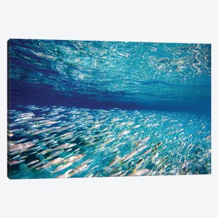 Fish Highway Canvas Print #SDV65} by Sean Davey Canvas Art Print