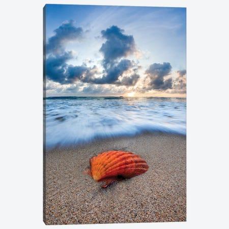 Amber Shell Sunrise Canvas Print #SDV6} by Sean Davey Canvas Art