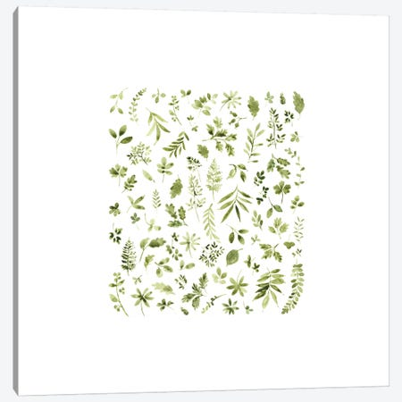 Leaf Study No. 3 Canvas Print #SEL13} by Melissa Selmin Canvas Artwork